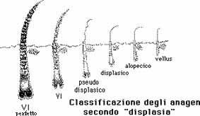 Il Ciclo Del Capello Ed Il Tricogramma Società Italiana Di Tricologia