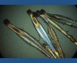 Corso pratico di Microscopia in Luce Polarizzata