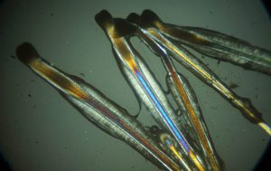 Corso di Microscopia in Luce Polarizzata